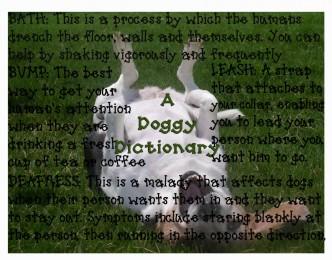 doggydictionary