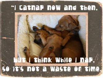 puppies_catnap