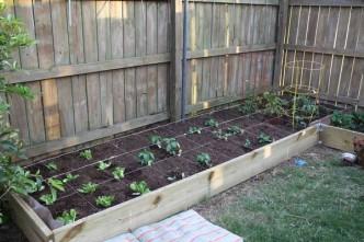 Left side of garden plot