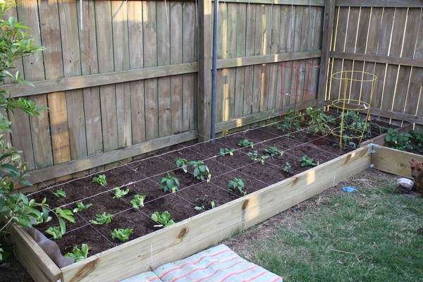 Vegetable Garden – Phase Three