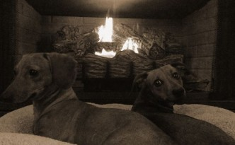 dachsunds_by_the_fire2