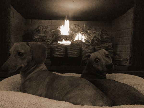 Puppies, Soft Bed and a Fire
